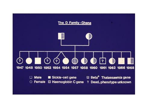 d-family